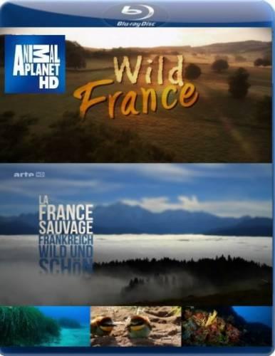 Дикая Франция онлайн